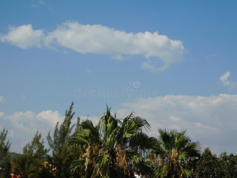 Céu tropical imagem de stock royalty free