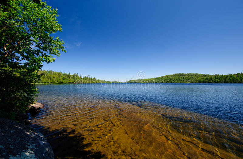 Céus azuis sobre as madeiras nortes fotos de stock