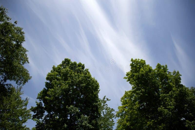 Céus Azuis Sobre Partes Superiores Da árvore Domínio Público Cc0 Imagem