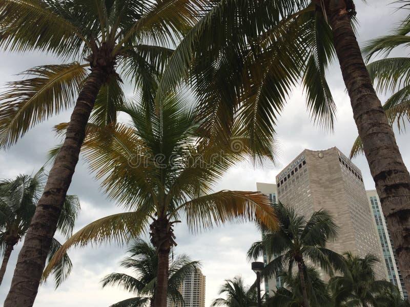 Céus ensolarados azuis e vistas de uma construção moderna do arranha-céus em Miami do centro através das palmeiras imagens de stock