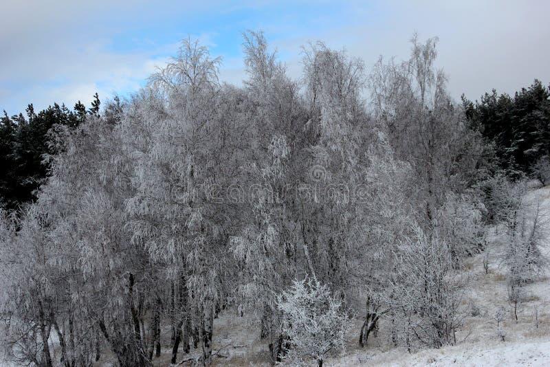 Cênico, natureza bonita da floresta do inverno no inverno fotos de stock royalty free