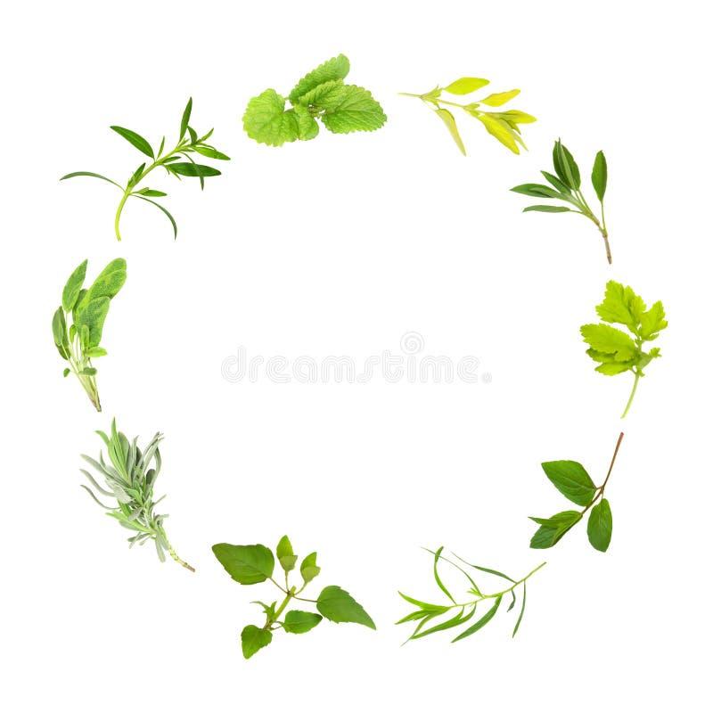 Círculo da folha da erva fotografia de stock