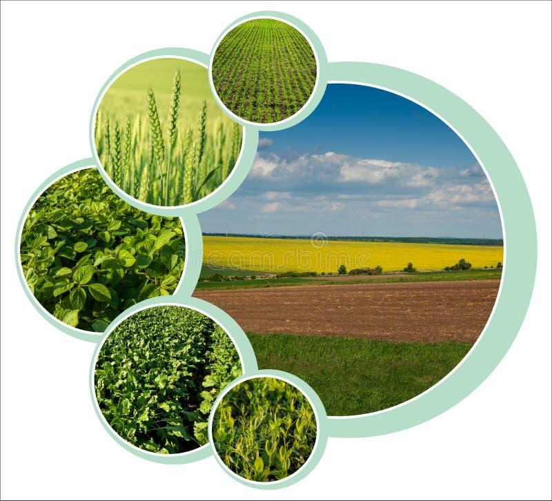 Círculo de diseño individual para el tema agrario con foto imagenes de archivo