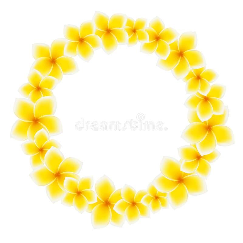 Círculo de flores do Frangipani ilustração do vetor