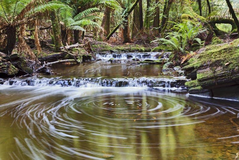 Círculo de la piscina de la corriente del campo de Tasmania Mt foto de archivo