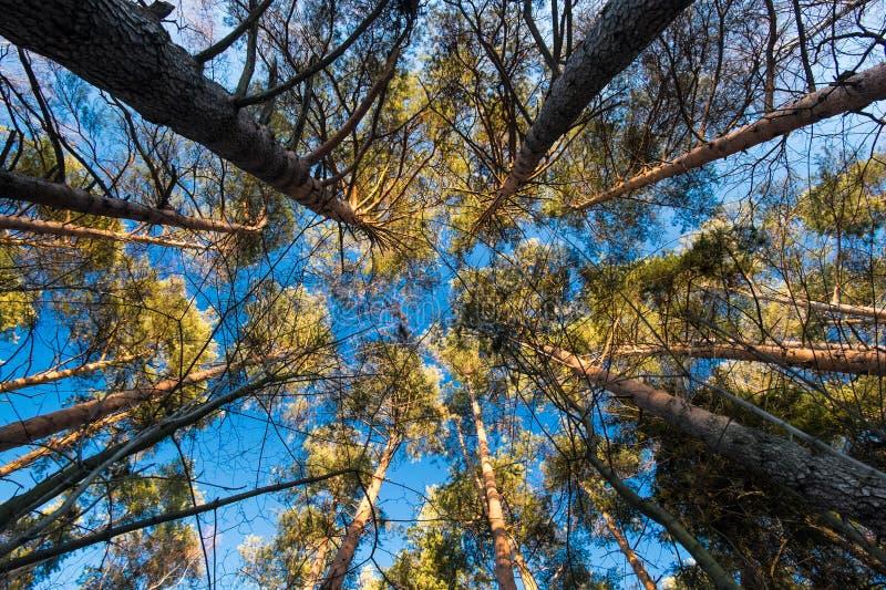 Círculo de los pinos foto de archivo