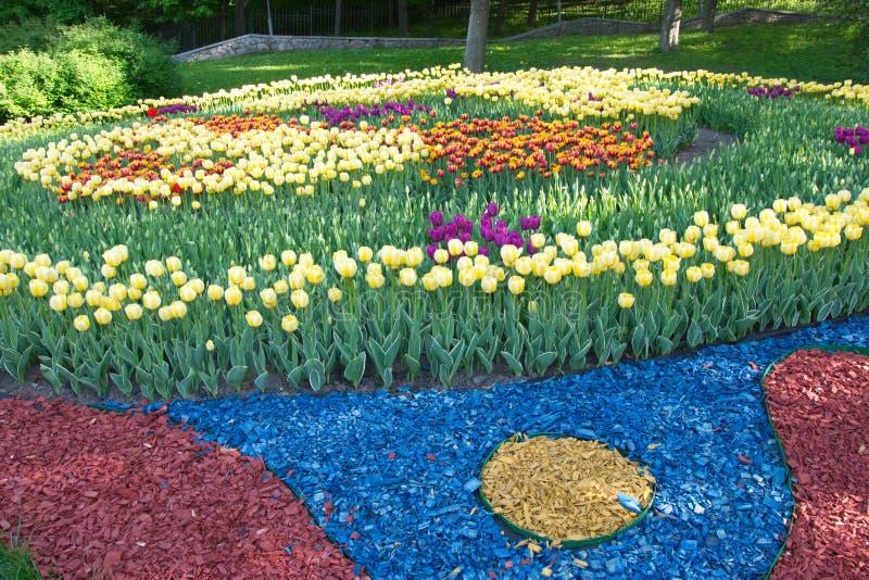Círculo de los tulipanes de la primavera en el parque Kiev, Ucrania foto de archivo