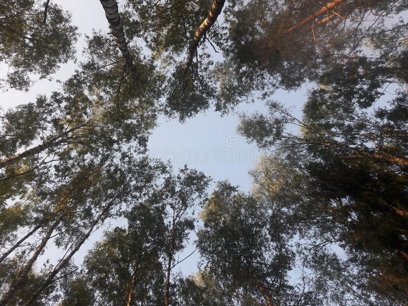 Círculo en el cielo foto de archivo libre de regalías