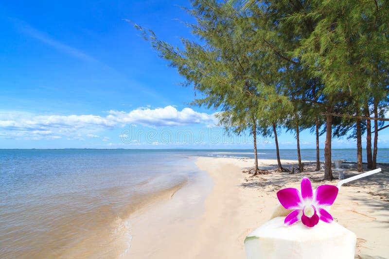 Cóctel del coco para servir en la playa imagen de archivo