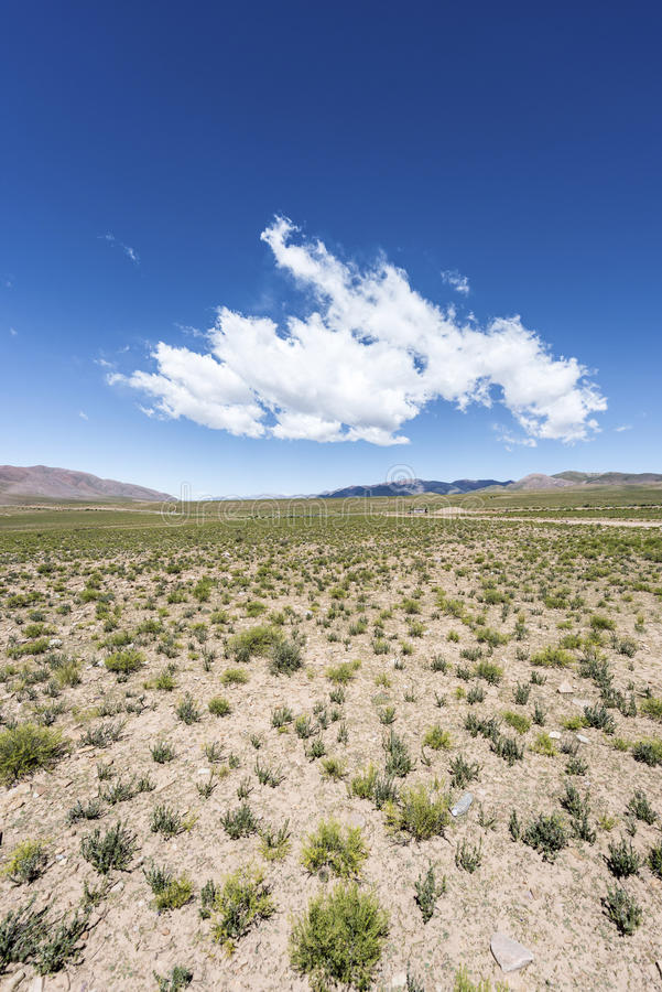 Cóndor, Quebrada de Humahuaca, Jujuy, la Argentina imagen de archivo libre de regalías