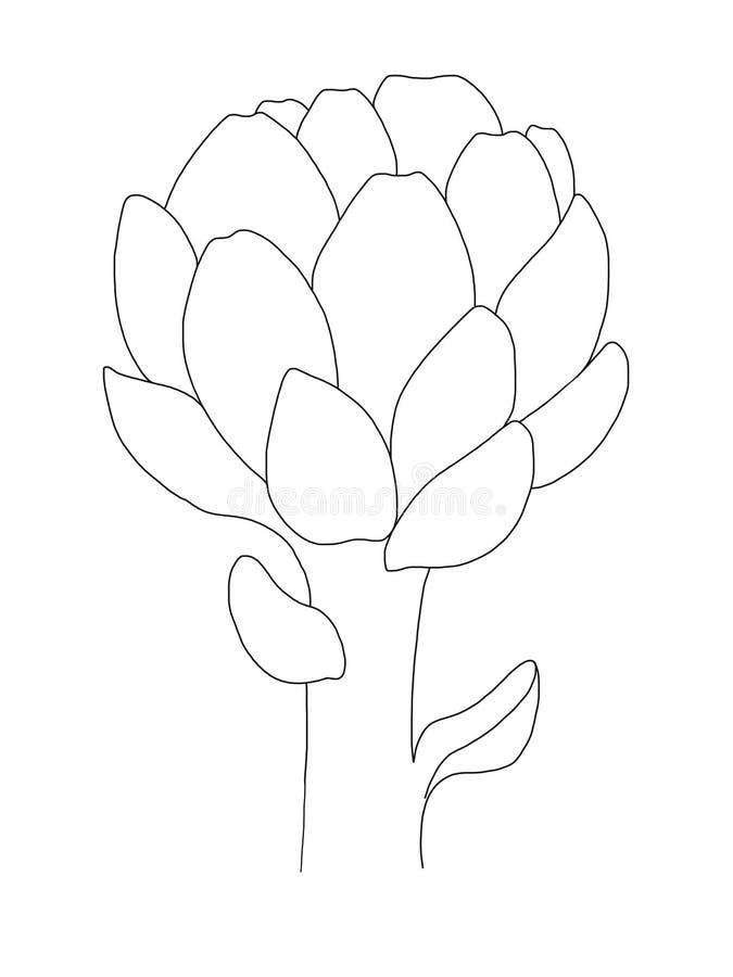 Cópia da alcachofra Ícone alinhado preto no fundo branco Alimento biológico saudável Linha projeto da arte, ilustração do esboço  ilustração do vetor