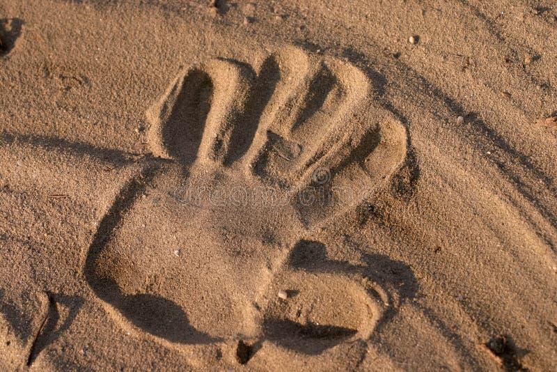 Cópia da mão na areia imagens de stock royalty free