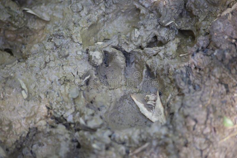 Cópia do cão na lama foto de stock