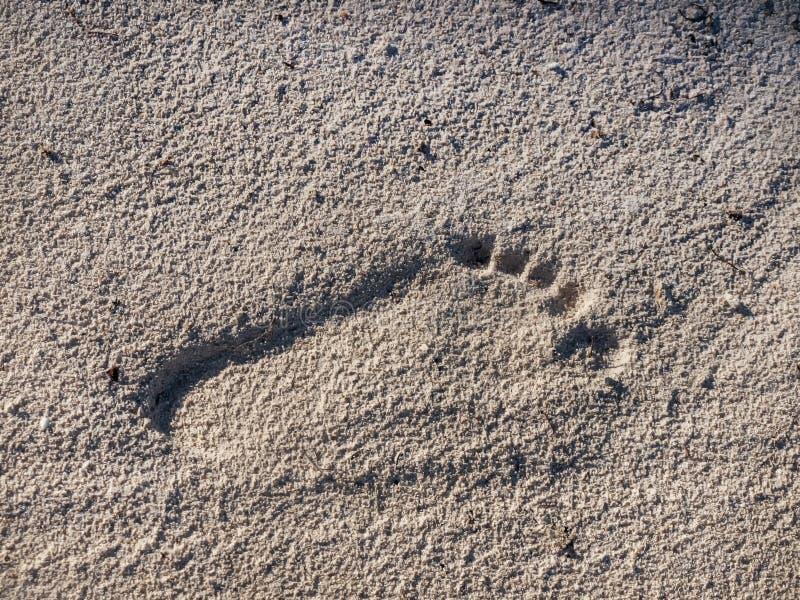 Cópia do pé esquerdo na areia foto de stock