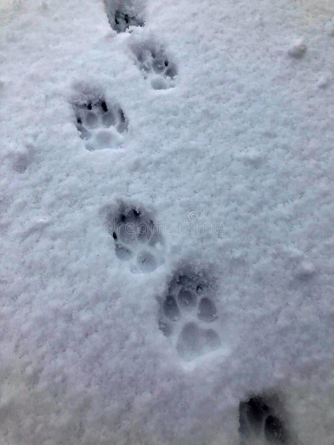 Cópias da pata do cão na neve fotos de stock royalty free