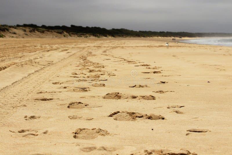 Cópias do pé de alguém na praia fotografia de stock royalty free