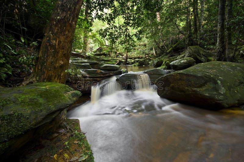 Córrego 3 da floresta fotografia de stock