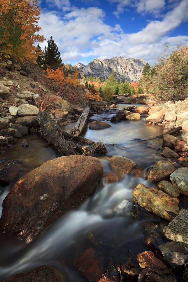 Córrego alpino da floresta no outono fotografia de stock royalty free