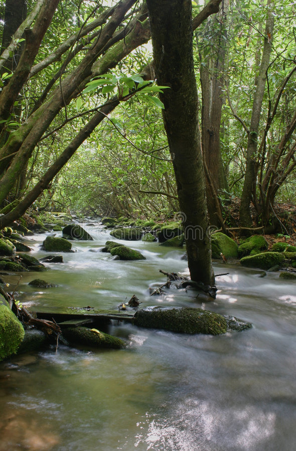 Córrego arborizado foto de stock royalty free