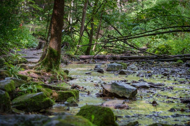 Córrego arborizado imagem de stock royalty free