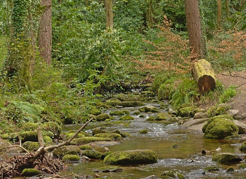 Córrego através da floresta de Tticknock, ireland fotos de stock royalty free