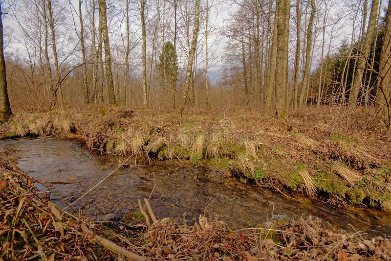 Córrego através de uma região selvagem da floresta imagem de stock royalty free