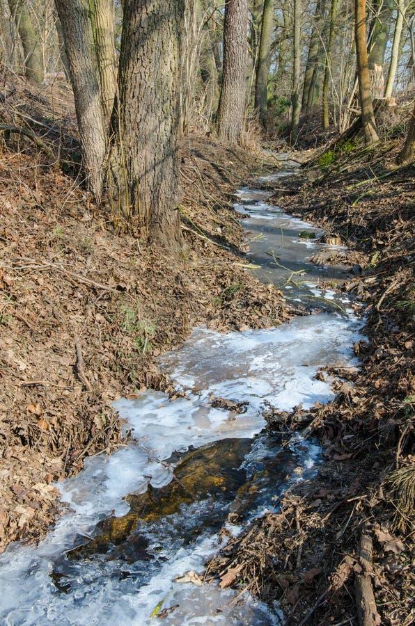 Córrego congelado na floresta foto de stock