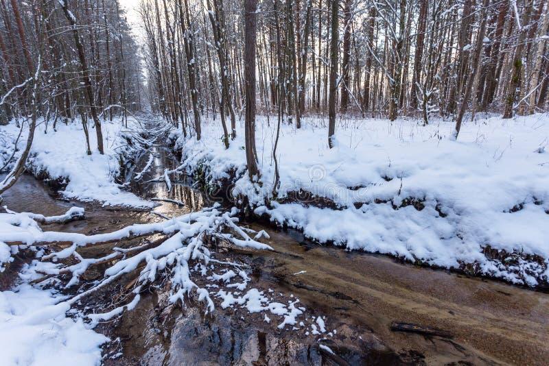 Córrego congelado na floresta do inverno imagens de stock royalty free