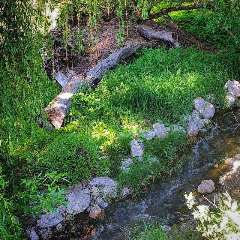 Córrego da água de fluxo foto de stock royalty free