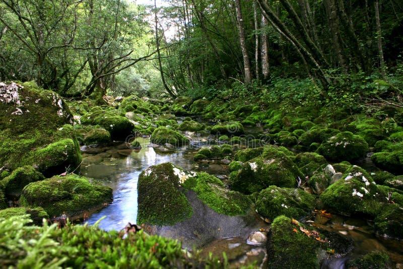 Córrego da floresta fotos de stock