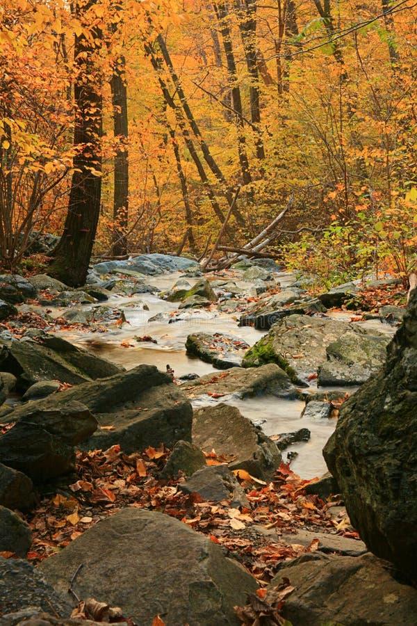 Córrego da floresta da queda foto de stock