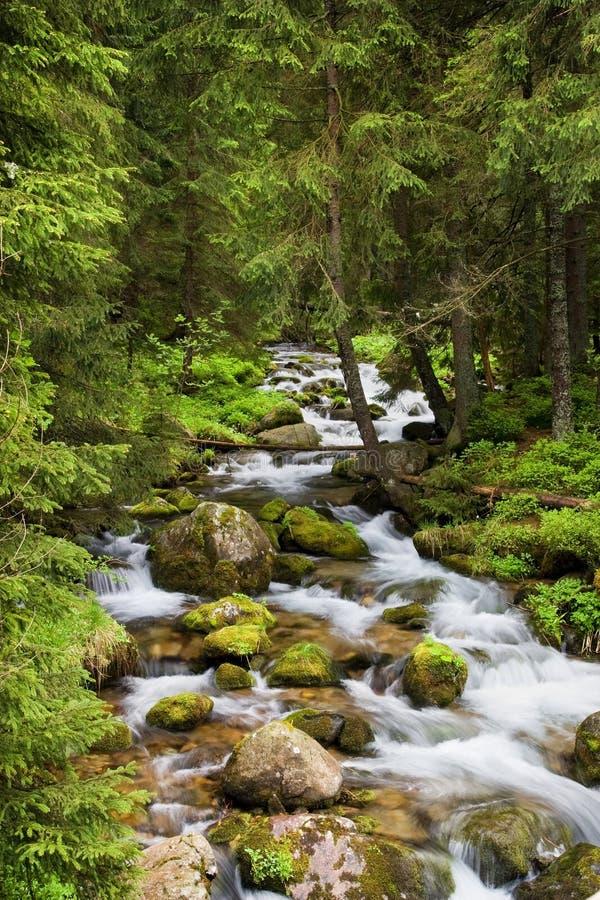 Córrego da floresta em montanhas de Tatra foto de stock royalty free