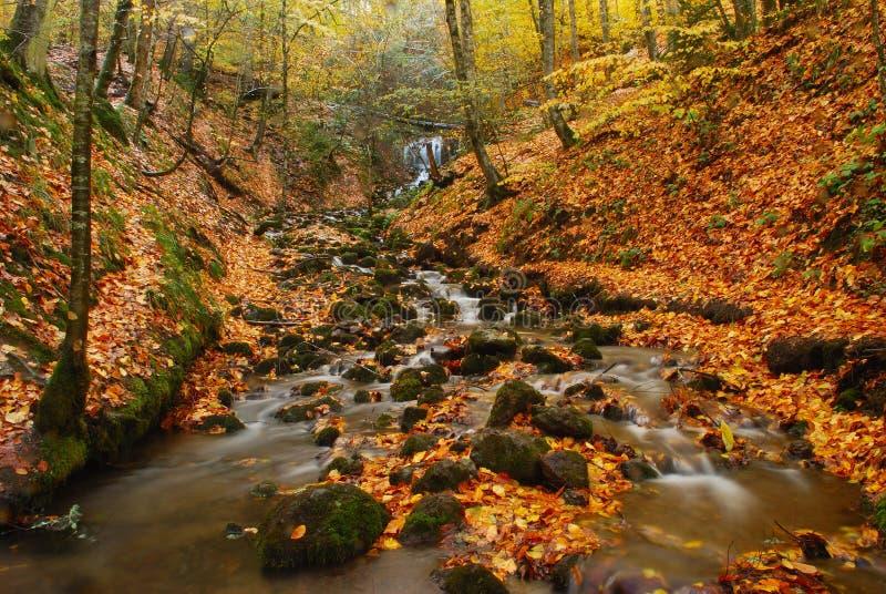 Córrego da floresta em Turquia. fotografia de stock royalty free