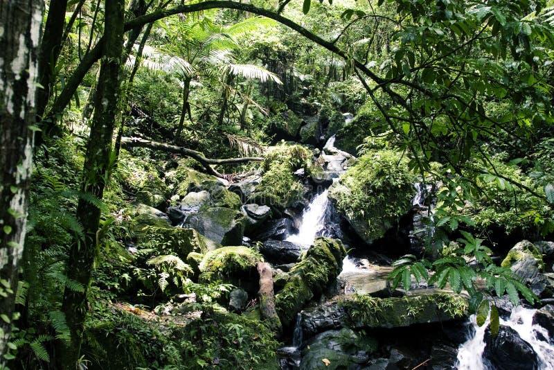 Córrego da floresta húmida imagem de stock royalty free