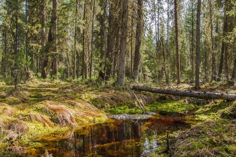 Córrego da floresta na mola imagem de stock royalty free