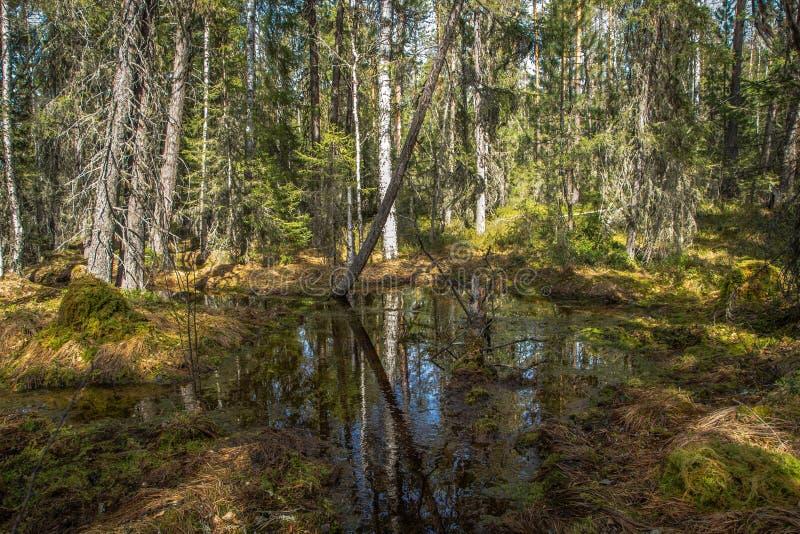 Córrego da floresta na mola foto de stock