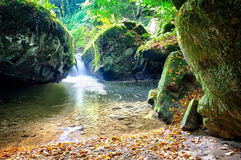 Córrego da floresta no dia ensolarado do outono imagem de stock royalty free