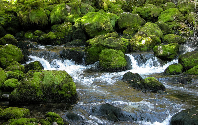 Córrego da floresta sobre rochas mossy verdes. fotos de stock royalty free