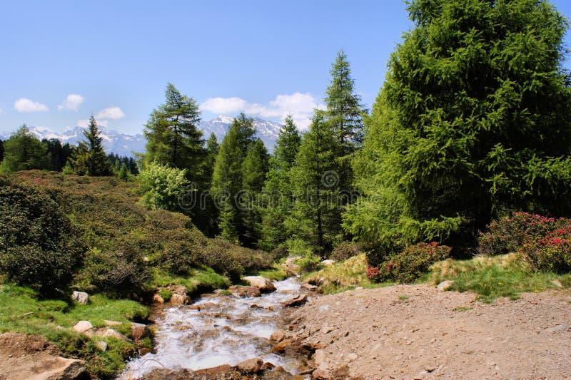 Córrego Da Montanha Imagens de Stock