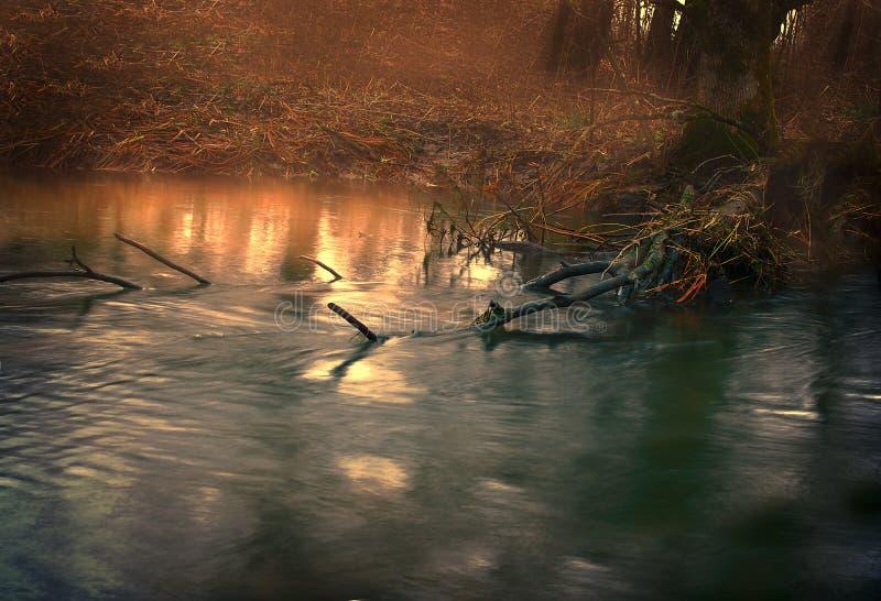 Córrego da montanha da floresta imagem de stock