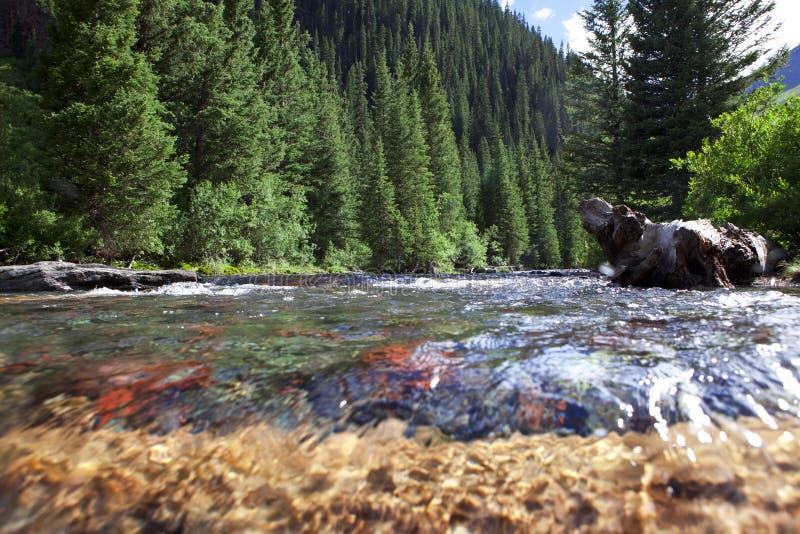 Córrego da montanha em Colorado fotos de stock royalty free