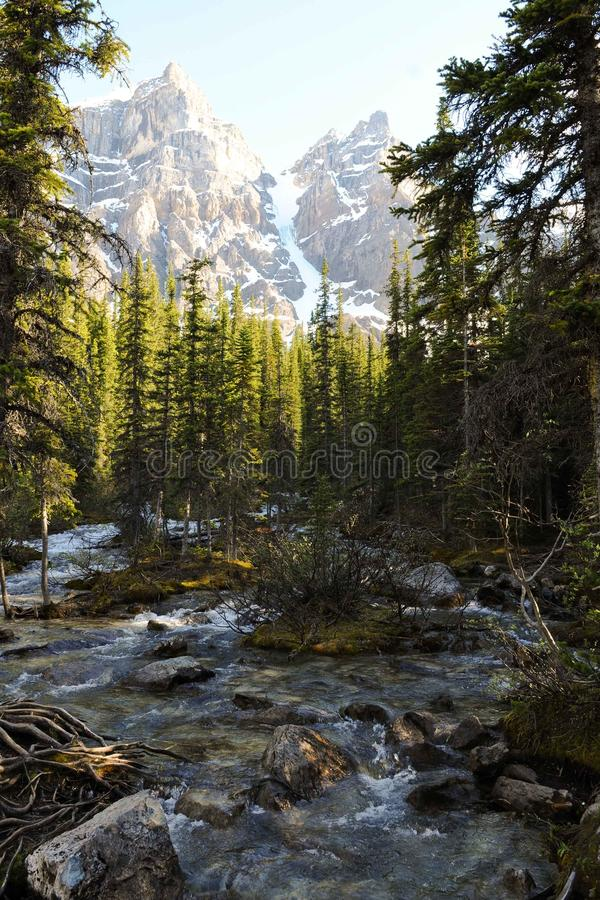 Córrego da montanha no parque nacional de Banff fotografia de stock