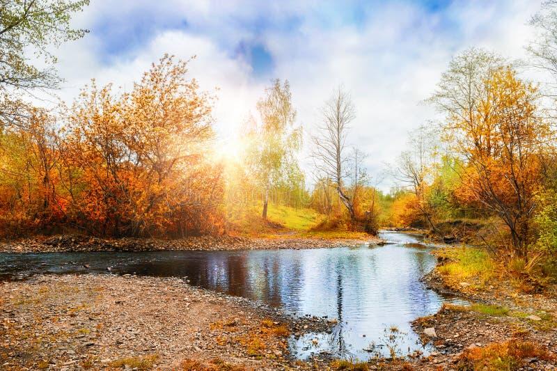 Córrego da montanha, paisagem do outono da floresta no por do sol fotos de stock royalty free