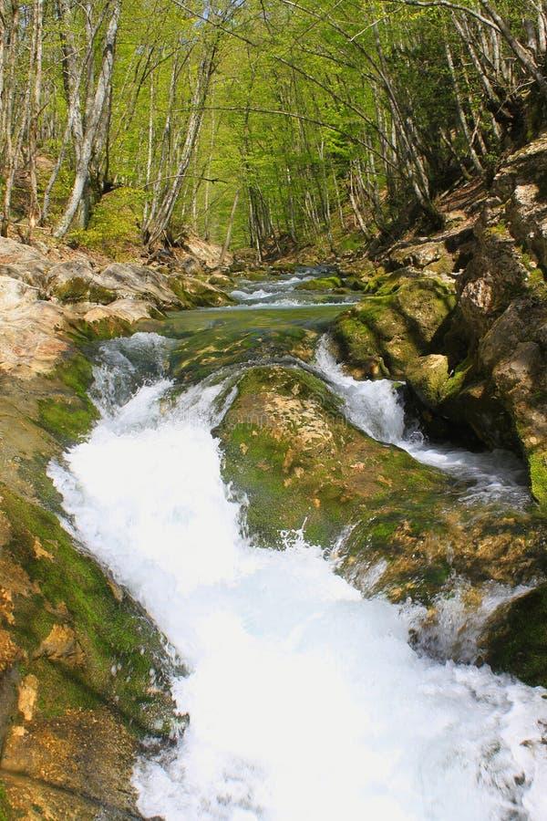 Córrego da montanha que flui rapidamente entre as árvores imagens de stock