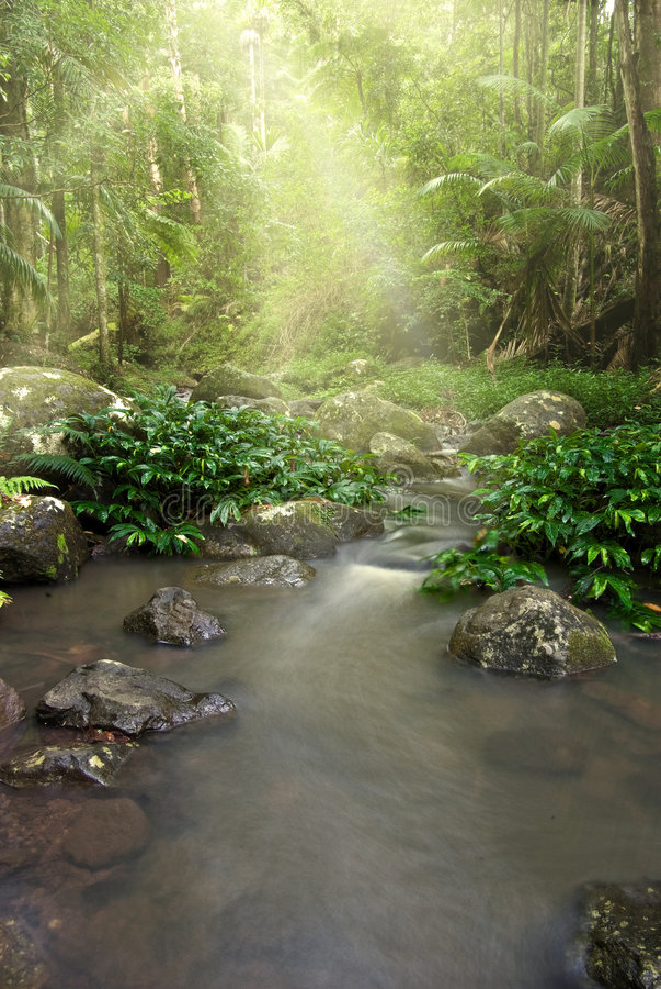 Córrego da natureza da floresta húmida   imagens de stock