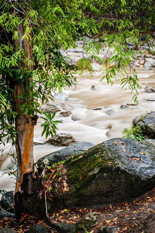Córrego da queda de Chamang fotos de stock royalty free