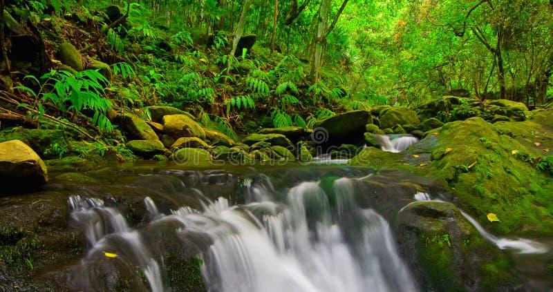 Córrego da selva imagem de stock royalty free
