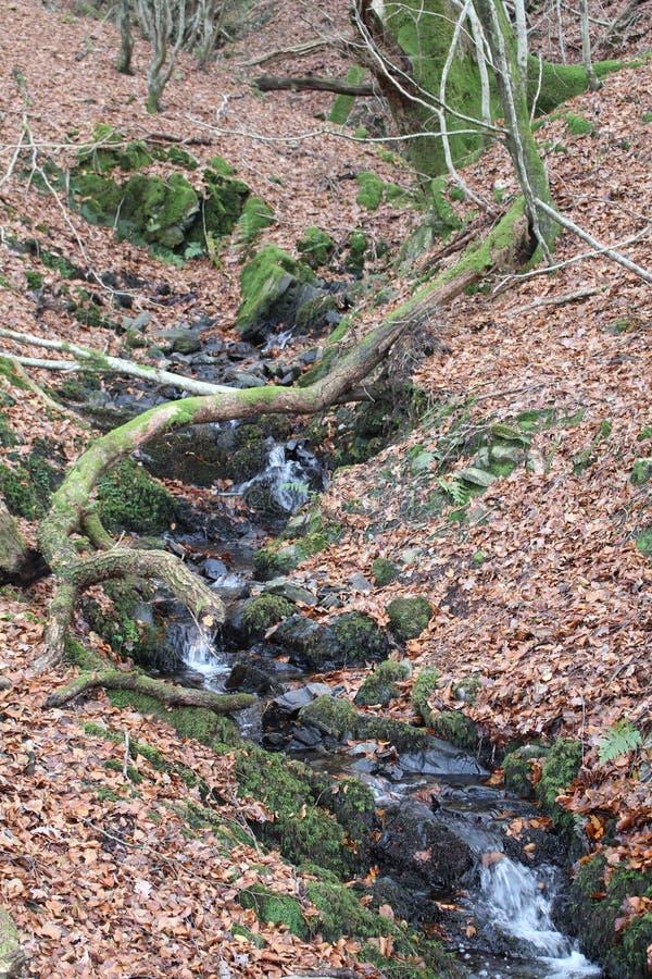 Córrego de Autumn Leaves e da floresta fotos de stock royalty free