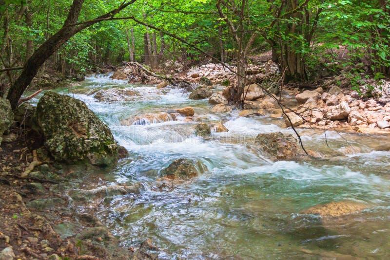 Córrego de conexão em cascata da montanha na floresta verde foto de stock royalty free