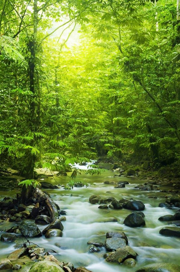 Córrego de Moutain foto de stock royalty free